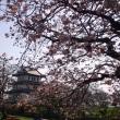 函館・江差・松前の桜10景を訪ねる: