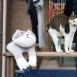犬と猫の関係&モモと元気の正月飾り