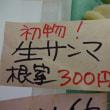 脂トロトロです!噴火湾直送「銀鮭(ルイベ)刺身」です!!刺身と手作り干物の専門店「発寒かねしげ鮮魚店」の魚屋しげ。