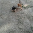 Dog Parkデビュー