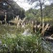 マッキーの『四季を楽しむ』:国立科学博物館付属自然教育園の秋
