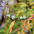 紅葉通りの落ち葉と、狂い咲く花々