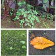 軽井沢の苔