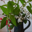 秋色アキランサス★気に入った花瓶に庭の花を