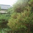 庭の設計・維持管理