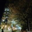 大国魂神社の枝垂桜