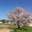 春ですのでそろそろ♪