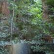 群馬県桐生市、広沢賀茂神社の杉とモミ群の続きです!!