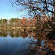 静寂 池の香り ・・・・ 三宝寺池
