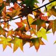 もう、秋だよ! 【ひで某】