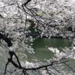 【古い写真】2007年04 千鳥ヶ淵の桜