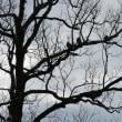 木々のシルエット