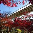 けいはんな記念公園紅葉とエナガ