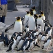 葛西のペンギン4種が集合