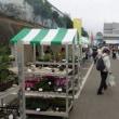 横浜北のJAまつりに今年も花苗を買いに