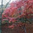 那須は紅葉真っ盛り