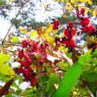 ニュータウンの公園の秋    (水戸市)