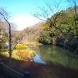 冬の鎌倉;鎌倉中央公園・深沢地区をちょっとだけお散歩