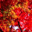 秋の終わりに・・・
