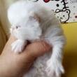 カゴ入り子猫ちゃんの色と性格