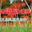 錦江湾公園の彼岸花 RX100MV