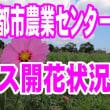 鹿児島市都市農業センターコスモスの開花状況を見に寄ってみた。