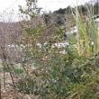 庭木の剪定と施肥/インフル流行 長期化恐れ 米拡大のA香港型も/市販の風邪薬で重篤な副作用の危険