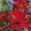 紅葉の街路樹3