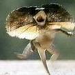 蜥蜴走るって、、