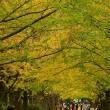 昭和記念公園の紅葉 2018(1)