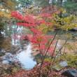 晩秋の清水園