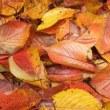 落ち葉の混在