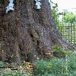 名木の下で【荏柄天神社】銀杏と曼殊沙華にみた秋