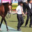 レッドライジェル 東京9R 湘南S 芝1600m