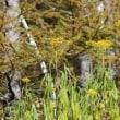 群馬県吾妻郡嬬恋村の湯の丸高原の山麓では、紅葉が始まっています