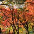 10月桜と紅葉と