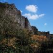 希少種の咲く峡谷