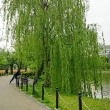 上野公園の春景色 その3