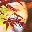 平林寺の紅葉