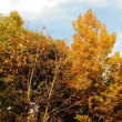 赤羽自然観察公園~11月