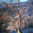 紅葉から冬桜へ