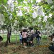 グリーン・ツーリズム 『ぶどうの収穫作業体験』報告