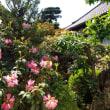 随心院のツツジ 京都市山科区・・・梅、紅葉とともにツツジも見事だ