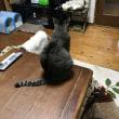 猫と電信電話記念日