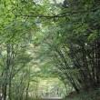 秋保 二口渓谷 でっかい苔玉がゴロゴロ。