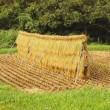 稲刈り ~もち米編~