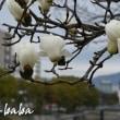広島城の散策