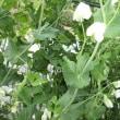 花盛りの庭からやっと・・・