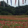 くりはま花の国にポポ出動