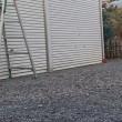 ムクドリギャングに押されるヒヨドリ